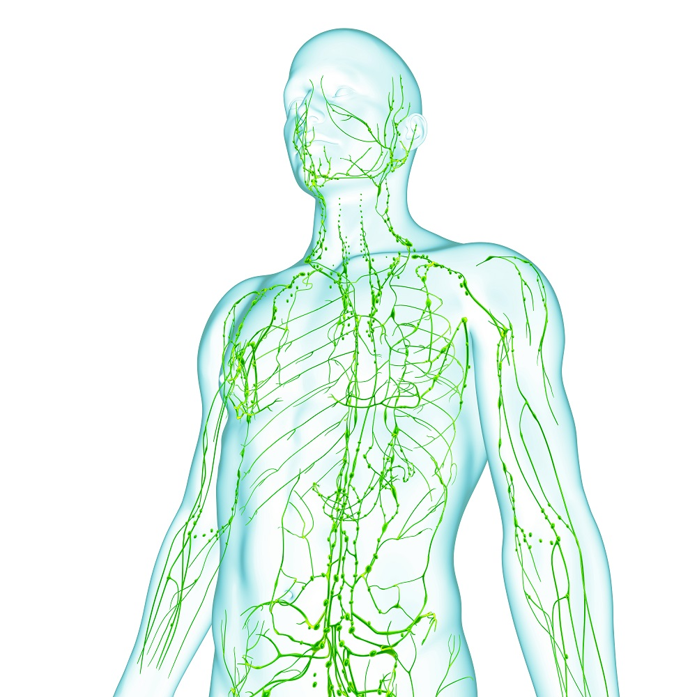 lymphatic system of male front